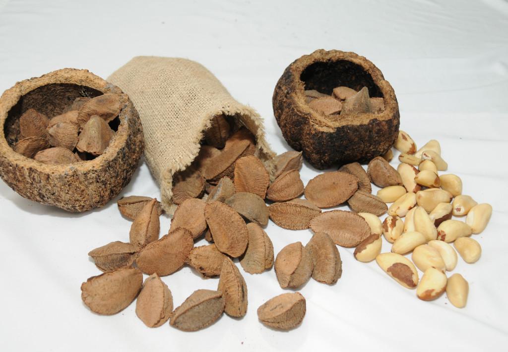 Benefícios da castanha do pará brasil chris castro 2